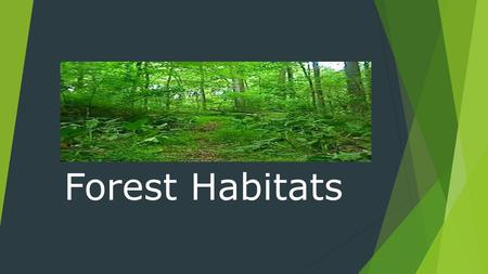 Forest Habitats. Temperature  Depends on where the forest is located  Can be cold to warm.