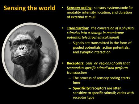 Sensing the world Sensory coding: sensory systems code for modality, intensity, location, and duration of external stimuli. Transduction: the conversion.
