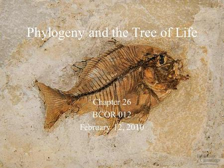 Phylogeny and the Tree of Life Chapter 26 BCOR 012 February 12, 2010.