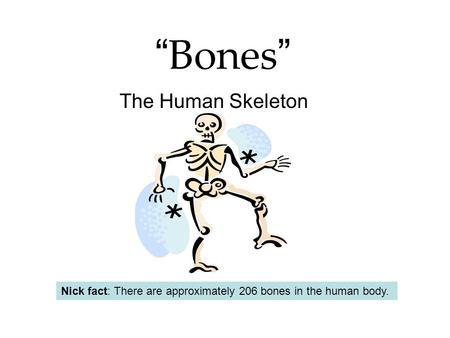 """ Bones "" The Human Skeleton Nick fact: There are approximately 206 bones in the human body."