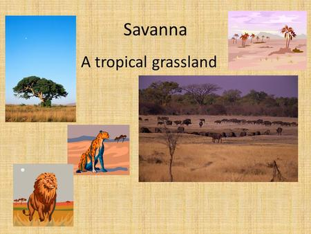 Savanna A tropical grassland. Monsoon Seasonal winds that bring wet and dry seasons.