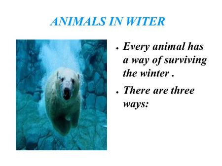 ANIMALS IN WITER ● Every animal has a way of surviving the winter. ● There are three ways: