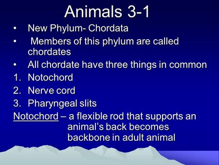 Animals 3-1 New Phylum- ChordataNew Phylum- Chordata Members of this phylum are called chordates Members of this phylum are called chordates All chordate.