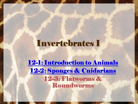 Invertebrates I 12-1: Introduction to Animals 12-2: Sponges & Cnidarians 12-3: Flatworms & Roundworms.