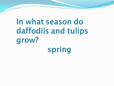 In what season do daffodils and tulips grow? spring.