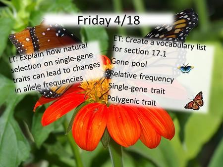 Friday 4/18 LT: Explain how natural selection on single-gene traits can lead to changes in allele frequencies ET: Create a vocabulary list for section.