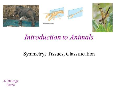 Introduction to Animals Symmetry, Tissues, Classification AP Biology Unit 6.