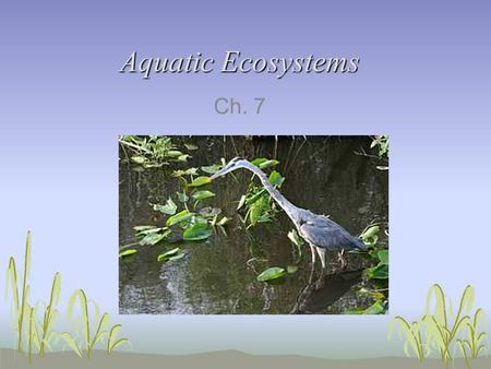 Aquatic Ecosystems Ch. 7. Aquatic Ecosystems Temperature, sunlight, oxygen, nutrients determine where organisms live 3 groups of organisms Plankton- drifters,
