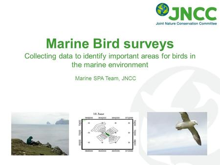 Marine Bird surveys Collecting data to identify important areas for birds in the marine environment Marine SPA Team, JNCC.