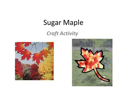 Sugar Maple Craft Activity. Background: The adoption of House Concurrent Resolution 12 on March 7, 1949, authorized a vote by public school students and.