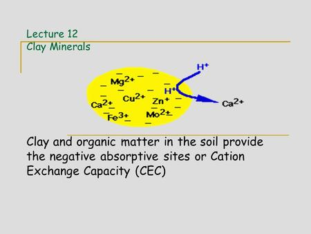 Lecture 12 Clay Minerals Clay and organic matter in the soil provide the negative absorptive sites or Cation Exchange Capacity (CEC)