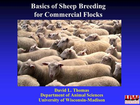 David L. Thomas Department of Animal Sciences University of Wisconsin-Madison Basics of Sheep Breeding for Commercial Flocks.
