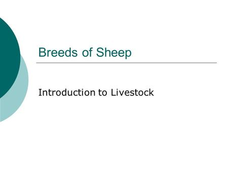 Breeds of Sheep Introduction to Livestock. Commercial Use Classification of Breeds  Ewe breeds  Ram breeds  Dual Purpose breeds.