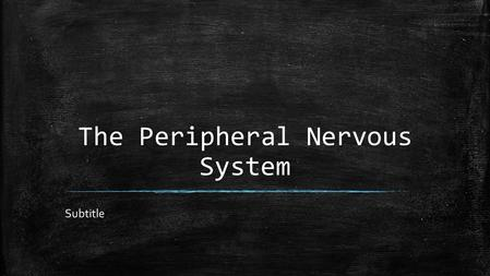 The Peripheral Nervous System Subtitle. The Spinal Cord ▪ Function: to relay information to and from the brain ▪ Description: white cable around 43cm.