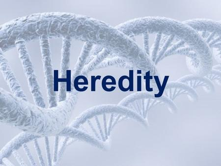 Heredity. Learned Behavior Inherited Trait Look at he list below and decide if each is a learned behavior or an inherited trait: using tools curly hair.