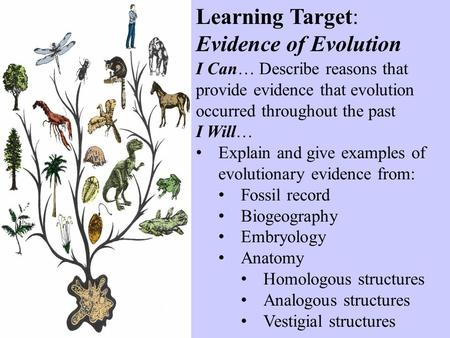 Learning Target: Evidence of Evolution I Can… Describe reasons that provide evidence that evolution occurred throughout the past I Will… Explain and give.