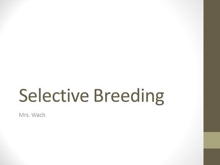Selective Breeding Mrs. Wach. Selective Breeding This is the oldest type of genetic manipulation. Breeding organisms for a desired characteristic. Works.