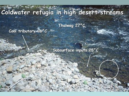 Cool tributary 26°C Subsurface inputs 25°C Coldwater refugia in high desert streams Thalweg 27°C.