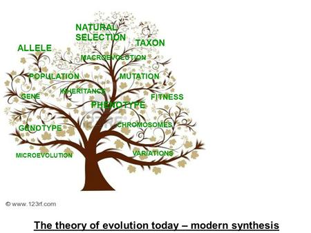 The theory of evolution today – modern synthesis ALLELE GENE FITNESS GENOTYPE PHENOTYPE MUTATION CHROMOSOMES TAXON VARIATIONS MACROEVOLUTION MICROEVOLUTION.