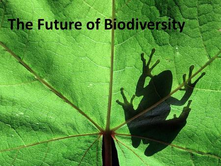 The Future of Biodiversity. Objectives List and describe four types of efforts to save individual species. Explain the advantages of protecting entire.
