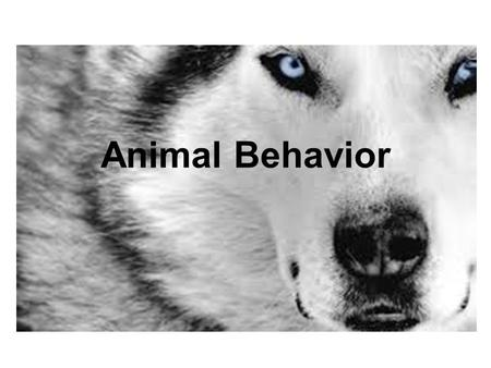 Animal Behavior. Behavior BEHAVIOR -The way an organism responds to changes in its internal and external environment. IS ESSENTIAL FOR A SPECIES SURVIVAL.