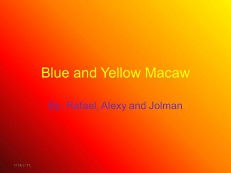 6/14/2011 Blue and Yellow Macaw By: Rafael, Alexy and Jolman.