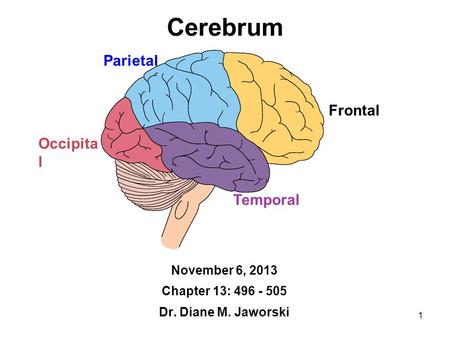1 Cerebrum November 6, 2013 Chapter 13: 496 - 505 Dr. Diane M. Jaworski Frontal Temporal Occipita l Parietal.