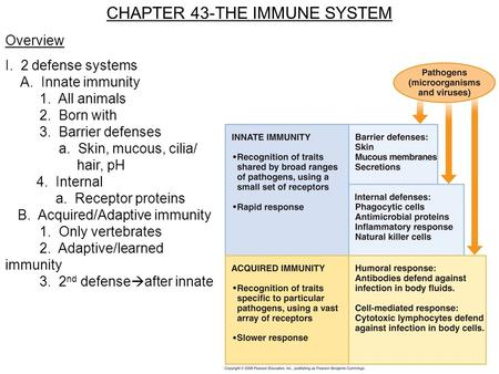 CHAPTER 43-THE IMMUNE SYSTEM Overview I. 2 defense systems A. Innate immunity 1. All animals 2. Born with 3. Barrier defenses a. Skin, mucous, cilia/ hair,