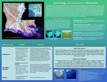 Hydrology of Louisiana's Wetlands Loss of Wetlands The coastal wetlands are eroding at exceedingly high rates. In the 1970s, when land loss rates were.