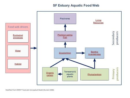 Modified from DRERIP Foodweb Conceptual Model (Durand 2008) SF Estuary Aquatic Food Web Water Habitat Food web drivers Ecological processes Zooplankton.