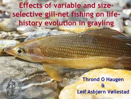 Effects of variable and size- selective gill-net fishing on life- history evolution in grayling Thrond O Haugen & Leif Asbjørn Vøllestad.