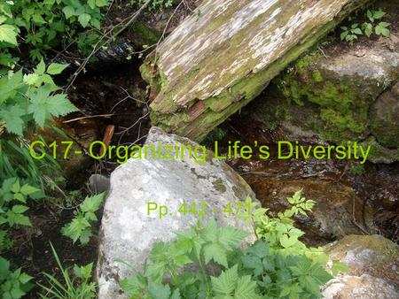 C17- Organizing Life's Diversity Pp. 442 - 471. C17- Organizing Life's C17- Organizing Life's Diversity   Classification- grouping of organisms or info.
