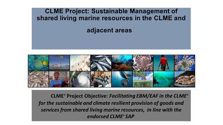 CLME Project: Sustainable Management of shared living marine resources in the CLME and adjacent areas CLME + Project Objective: Facilitating EBM/EAF in.