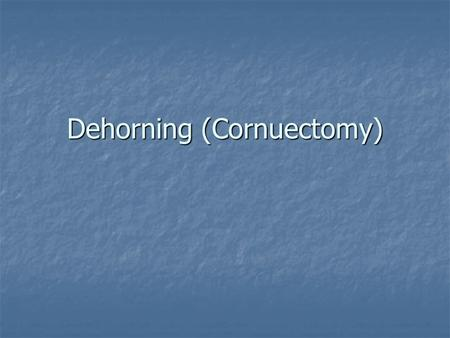 Dehorning (Cornuectomy). Horns are removed for several reasons Dangerous weapons Dangerous weapons Damage can done by fighting Damage can done by fighting.