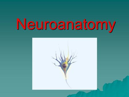 Neuroanatomy.  Neuroanatomy refers to the study of the parts and function of neurons.  Neurons are individual nerve cells.  The entirety of the human.