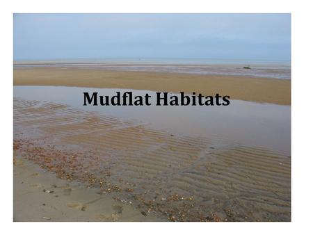 Mudflat Habitats. Characteristics Low energy areas – sheltered Made up of sand, mud, clay, detritus that has been deposited there Sediment – high organic.