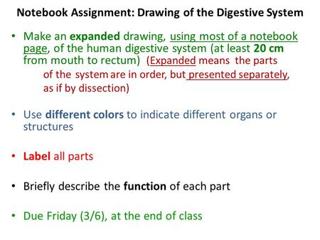 Notebook Assignment: Drawing of the Digestive System Make an expanded drawing, using most of a notebook page, of the human digestive system (at least 20.