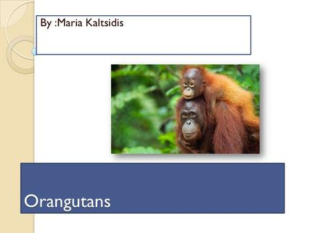 Orangutans By :Maria Kaltsidis Interesting Description Interesting Description  Orangutans have a red fur, and thick neck.  The orangutan is very tall.