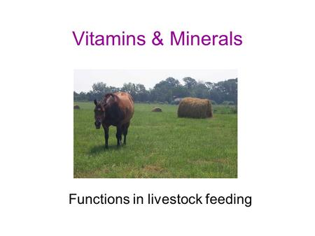Vitamins & Minerals Functions in livestock feeding.
