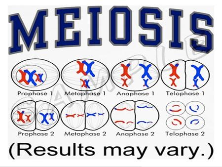 The most important fact of mitosis is that each daughter cell has the exact same genetic make-up as the original cell. Gregor Mendel – The Father of Genetics.