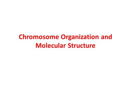 Chromosome Organization and Molecular Structure. Chromosomes are the structures that contain the genetic material –They are complexes of DNA and proteins.