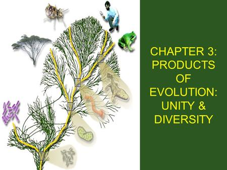 CHAPTER 3: PRODUCTS OF EVOLUTION: UNITY & DIVERSITY.