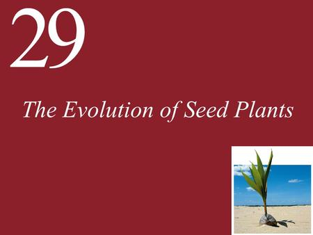 29 The Evolution of Seed Plants. 29 The Evolution of Seed Plants 29.1 How Did Seed Plants Become Today's Dominant Vegetation? 29.2 What Are the Major.
