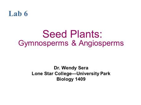 Seed Plants: Gymnosperms & Angiosperms Dr. Wendy Sera Lone Star College—University Park Biology 1409 Lab 6.
