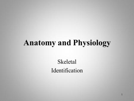 Anatomy and Physiology Skeletal Identification 1.