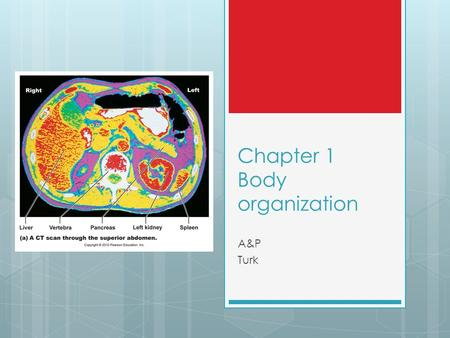 Chapter 1 Body organization A&P Turk. A&P  Anatomy  structure and morphology  Physiology.