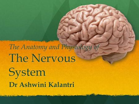 The Anatomy and Physiology of The Nervous System Dr Ashwini Kalantri.