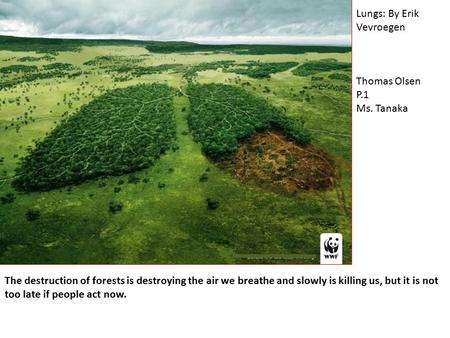 The destruction of forests is destroying the air we breathe and slowly is killing us, but it is not too late if people act now. Lungs: By Erik Vevroegen.