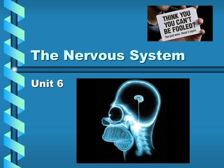 The Nervous System Unit 6 Objectives 1. Describe the 3 parts to the neuron1. Describe the 3 parts to the neuron 2. List the main divisions of the nervous.