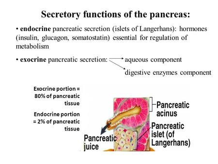 Secretory functions of the pancreas: endocrine pancreatic secretion (islets of Langerhans): hormones (insulin, glucagon, somatostatin) essential for regulation.